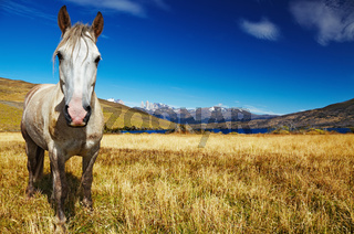 Horse in Torres del Paine, Chile