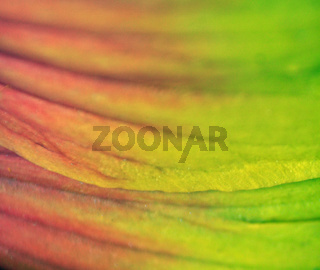 colorful flower leaves