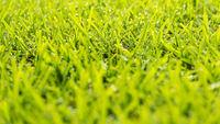 Grass Dew Drops