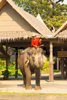 an elephant and a Thai prepare for turists show
