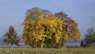 Spätherbst auf der Reichenau am Bodensee