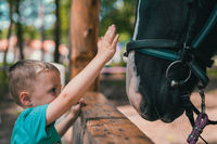 Cute little boy touching horse head