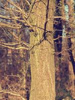 Close up of a beautiful tree