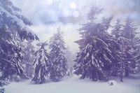 Winter forest Instagram filter