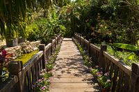 Beautiful wooden bridge in tropical park