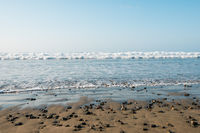 beach landscape - sand, stones, water and blue sky