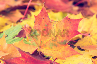 Autumnal leaves on the forest floor.