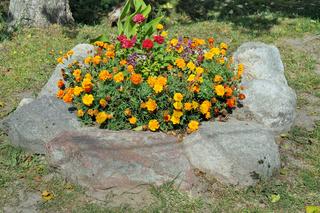 Orange maridolds flowers  blossom on a rural flower bed