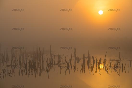 Goldenstedter Moor im Herbst