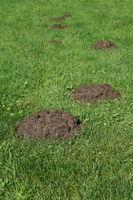 row of molehills