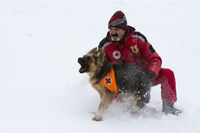 Red Cross rescuer with dog