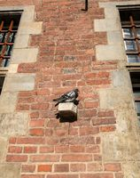 Pigeon rests on old Town Hall in Gdansk, Poland