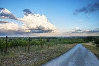 Rust am Neusiedlersee mit tollen Wolken und Weingarten