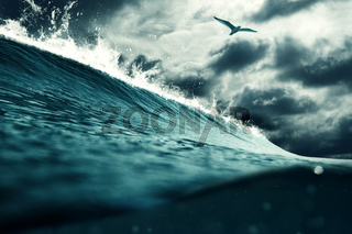 Big wave and a seagull