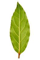 Laurel leaf isolated