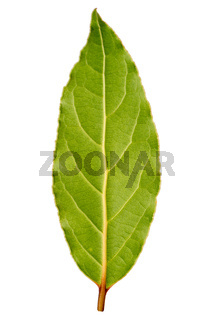 Laurel leaf isolated