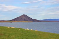 Late summer day at lake Myvatn, Iceland. Green meadow with a sheep herd.