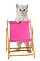 Kätzchen im Liegestuhl