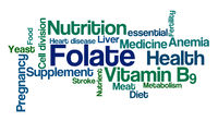 Word Cloud on a white background - Folate