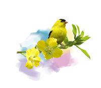 American Goldfinch watercolor