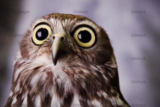 Amazoncom The Owl Killers A Novel 9780440244431