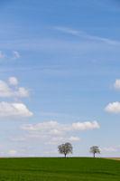Walnussbäume vor Wolkenhimmel