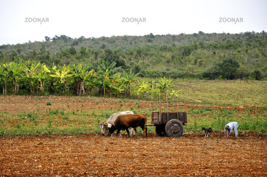 Kubanischer Bauer