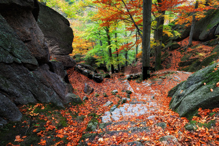 Fallen leaves on rocky mountain trail in picturesque autumn forest of Karkonosze Mountains