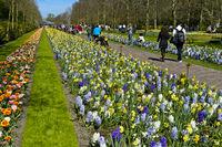 Promenadenweg durch die Gartenanlage Keukenhof, Lisse, Niederlande