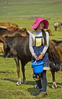 Junge mongolische Frau mit modischem Hut und Melkeimer schaut nach einer Stute zum Melken, Mongolei