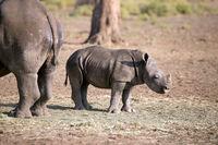 Nashorn Baby