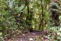 Dschungel in Mittelamerika