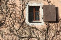 Kletterpflanze am Haus