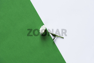 Single daisy on a green and white background