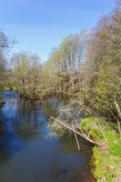 River flowing through a deciduous forest in spring