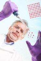 Senior life science researcher grafting bacteria.