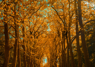 Autunm trees in the park, perfect fall scenery