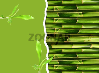 Dense bamboo stalk with copyspace