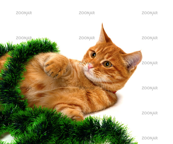 red headed kitten lying on its side in christmas tinsel