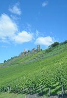 Burg Thurant ueber dem Weinort Alken,Mosel,Rheinland-Pfalz,Deutschland