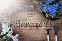 Sunny Spring Flowers, Pflanzzeit Means Planting Season