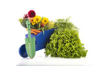 Wheel barrow with vegetables