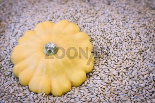 Yellow pumpkin on the background of grain.