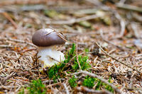 brown and white mushroom in forest