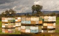 Beekeeper Boxes Bee Colony Farm Field