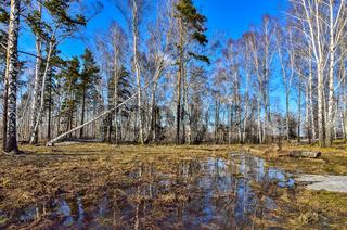 Vorfrühlingslandschaft im Wald mit schmelzendem Schnee und Wasser