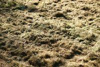 Gemähtes Gras
