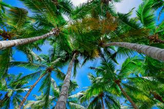 palm sun top Dominican Republic