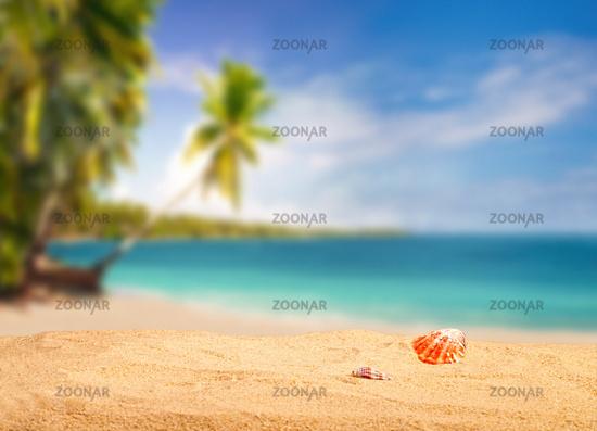 Tropischer Strand mit Muscheln