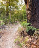 Refuge Cove Hiking Trail